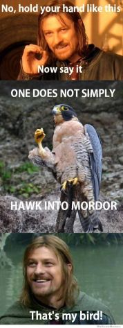 one-does-not-simply-hawk-into-mordor