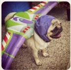 Pug-Lightyear…