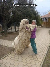 That's-A-Really-Big-Mop