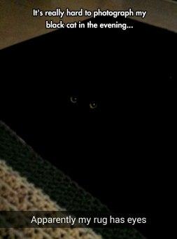 01 - cat