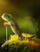 10 - wise reptile