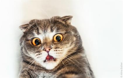 10 - cat